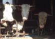 Nowe przepisy na rynku hodowlanym