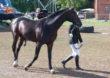 O hodowli koni w Janowie Podlaskim