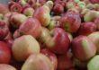 Zmiany w VAT pogorszą sytuację rolników i sadowników