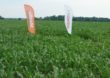Nowości w portfolio Bayer na rzecz innowacyjnego, zrównoważonego rolnictwa