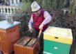 Nowa inicjatywa KOWR – S.O.S. dla pszczelarzy