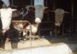 Modernizacja gospodarstw rolnych  – nabór wniosków