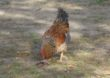 Wirus grypy ptaków w Bułgarii