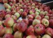Siła smaku, witamin i kolorów – poznaj jakość jabłek z Europy