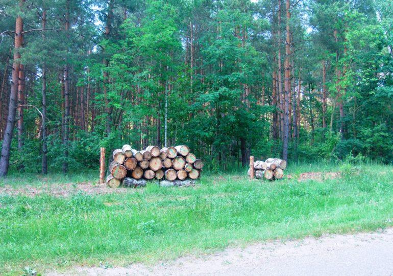 ARiMR zachęca właścicieli lasów do gromadzenia dokumentów niezbędnych do uzyskania pomocy z PROW 2014-2020