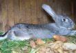 Co kryje się w karmie dla zwierząt