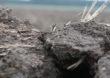 Jak zminimalizować skutki suszy glebowej?