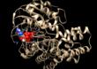 Tajemnicze białko, SGGW i światowy rozgłos