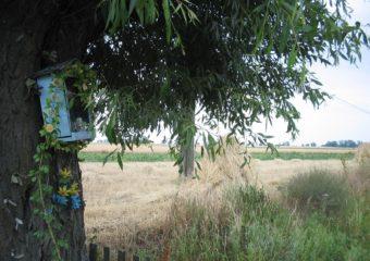 Żniwa w kraju – aktualna ocena Krajowej Federacji Producentów Zbóż