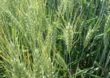 Zapraszamy na wykłady na temat nowych przepisów dotyczących zdrowia roślin