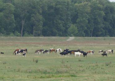Kodeks dobrej praktyki rolniczej w zakresie ograniczania emisji amoniaku
