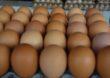 Rośnie popyt i ceny jaj w Unii Europejskiej
