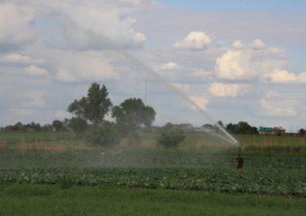 Ruszyły konsultacje społeczne projektu planu przeciwdziałania skutkom suszy