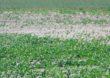Susza 2019 – Straty w rolnictwie
