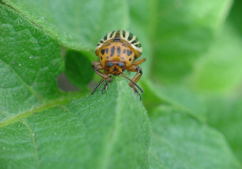 Konsultacje społeczne nowego prawa w zakresie zdrowia roślin