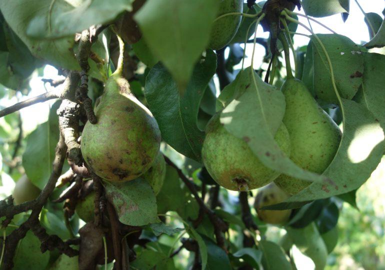 Pozwoli producentom zwiększyć produktywność i jakość upraw