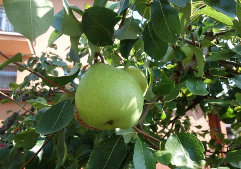 Parlament przeciwny patentowaniu roślin otrzymywanych naturalnie