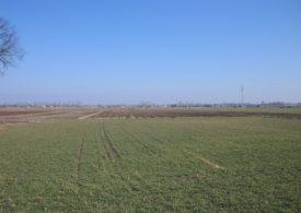 Zazielenienie – uproszczenie dla rolników