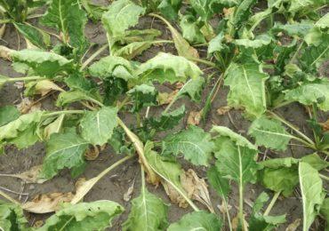 Nowe wyzwania w rolnictwie - susza