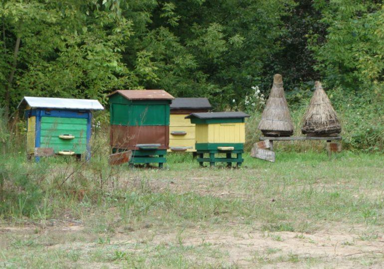 Pracują nad zdalnym i nieinwazyjnym narzędziem do nadzoru pasieki pszczelarskiej