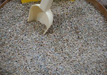 Ceny na krajowym rynku zbóż