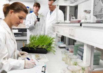 Corteva Agriscience wprowadza drugą markę nasion w Polsce