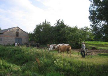 Wyzwania środowiskowe w rolnictwie