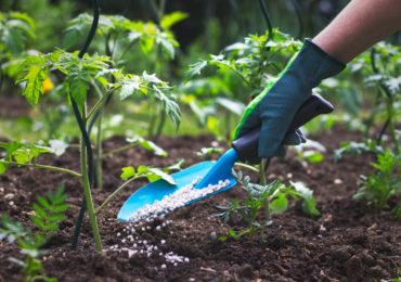 Do produkcji nawozów krzemianowych