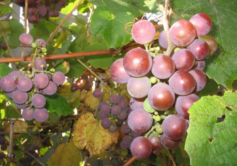 Deklarację dotyczące rynku wina