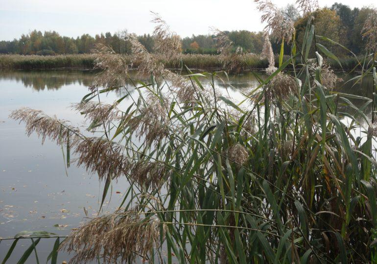 Nowelizacja ustawy Prawo wodne dot. ochrony wód przed azotanami