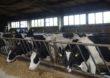 Dodatkowe wsparcie dla hodowców krów i świń
