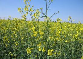 Chloropiryfos oraz chloropiryfos metylowy – wycofany przez UE
