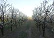 Jak koronawirus wpłynie na sektor owoców i warzyw? – pierwsze prognozy ekspertów z UE