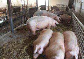 Koronawirus: Należy zapewnić nieprzerwaną obsługę i dobrostan utrzymywanych zwierząt