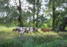 Koronawirus – Wytyczne GIW dla hodowców zwierząt
