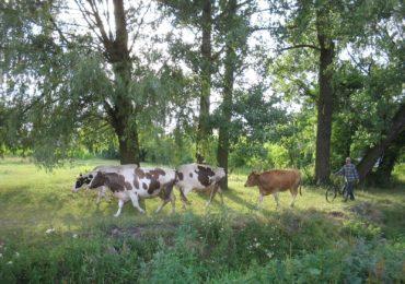 Koronawirus - Wytyczne GIW dla hodowców zwierząt