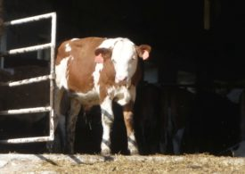 Komisja Europejska ogłasza nowy zestaw środków mających pomóc sektorowi rolno-spożywczemu w tym niespotykanym kryzysie po wybuchu pandemii koronawirusa