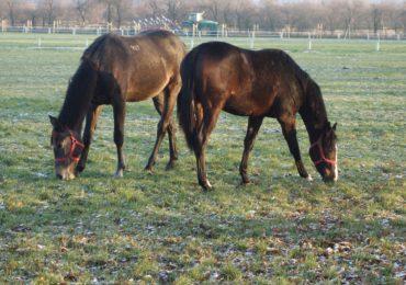 Pomoc dla małych ośrodków jeździeckich