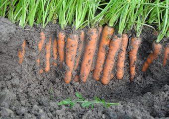 Warzywa. Czysty start