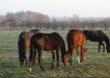 Apel hodowców koni oraz pracowników stadnin