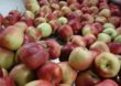 Bariery w sektorze warzywno – owocowym Jakie wyzwania stoją przed polskim sadownictwem? – Raport Unii Owocowej Trendy na polskim rynku sadowniczym