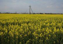 Prognozy średnich plonów zbóż i rzepaku w Polsce