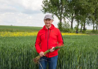 W pszenicy jakościowej kluczowy będzie zabieg T3
