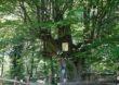 Drzewo Roku 2020