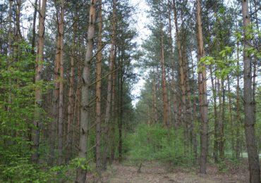 Wsparcie na zalesianie i tworzenie terenów zalesionych